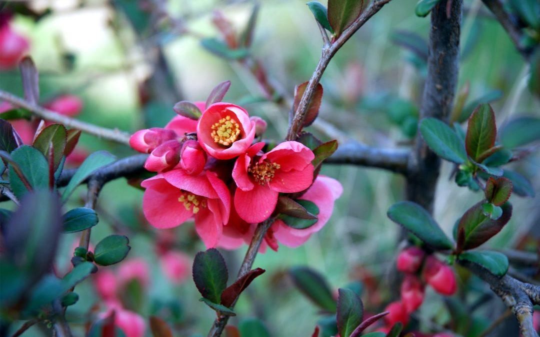 Tavaszi nagytakarítás – Vaszati tudatban