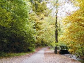Út az egészséghez... ha már itt tartunk: nagyon kedvező, ha a házadtól keletve vagy északra egy patak folyik