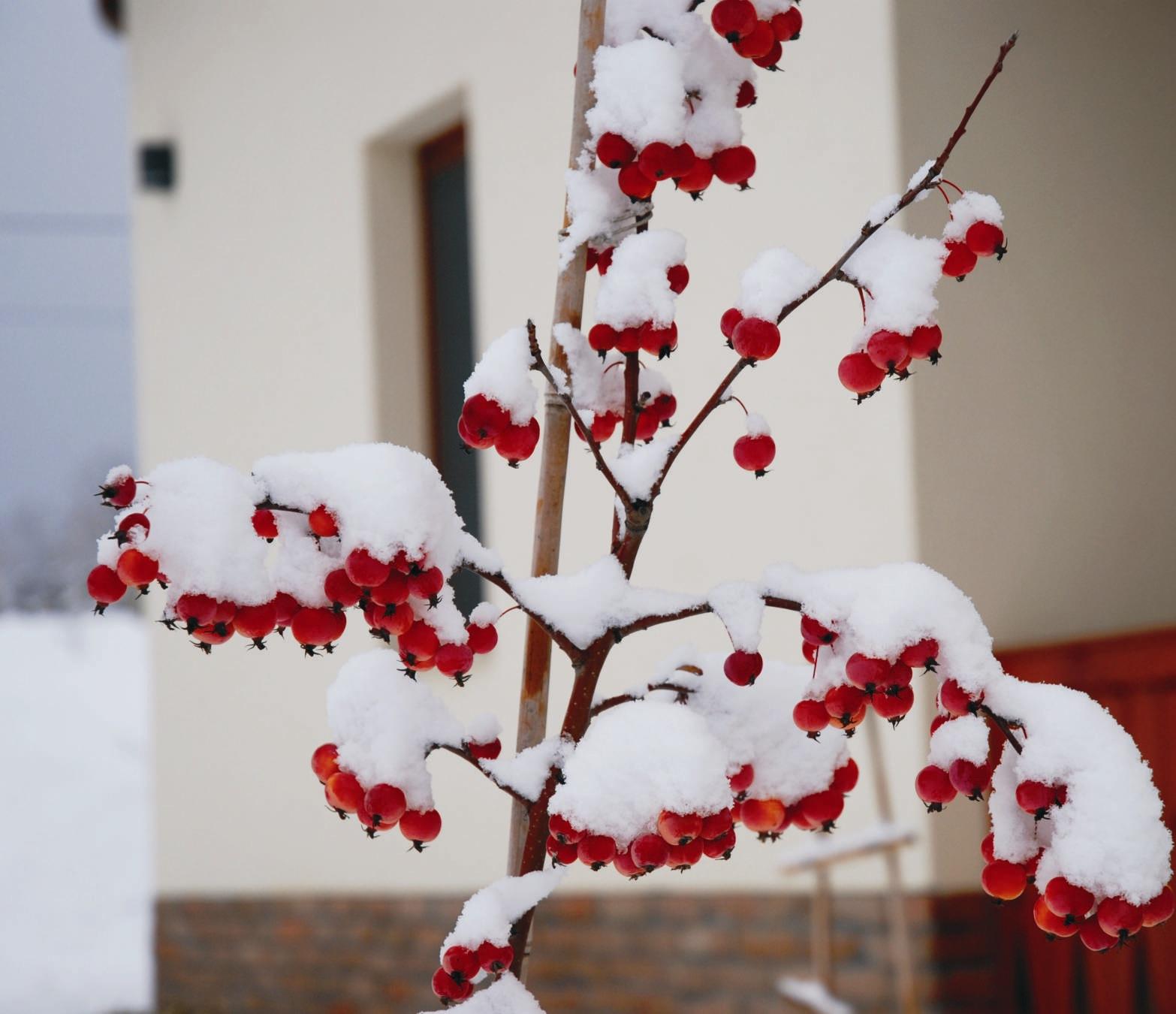 Valljuk be, a tél nem mindig ennyire gyönyörű...