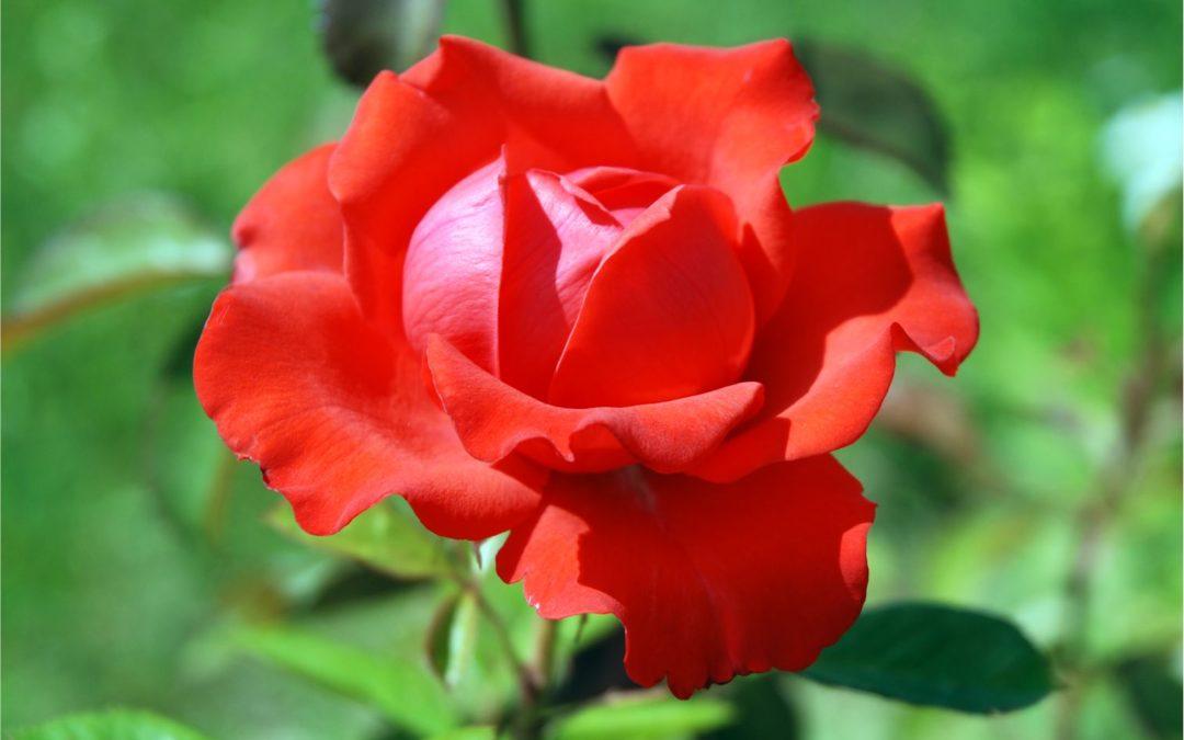Ha Valentin, akkor piros – de nem a Vaszati szerint!