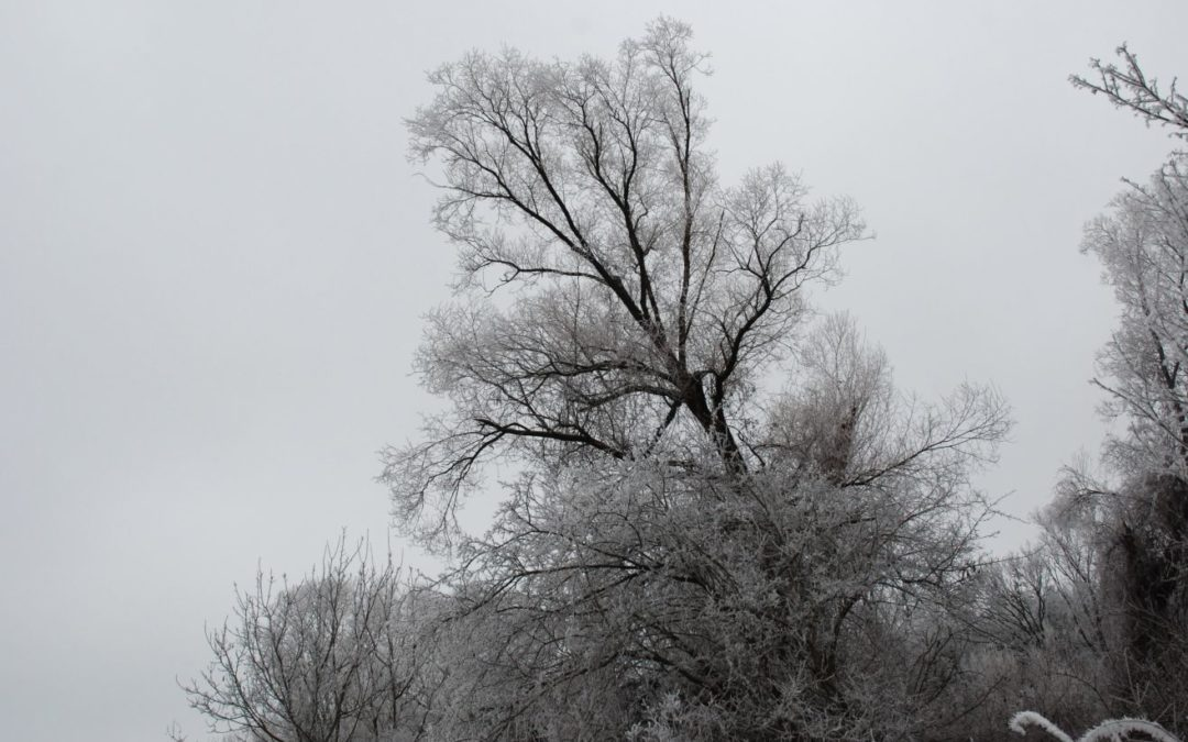 Szomorkás téli nap