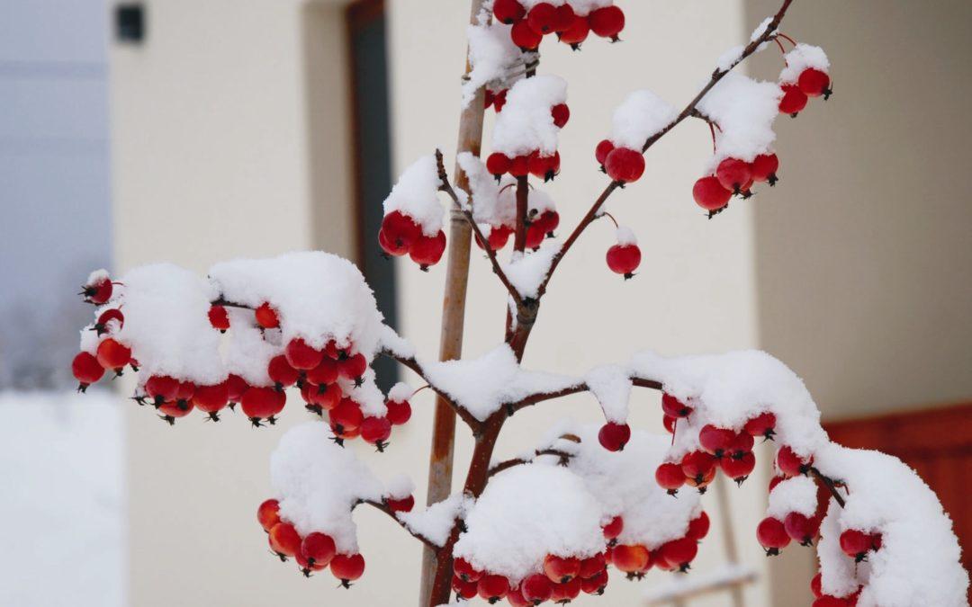 Kerti tippek – tervezgetni hóesésben is lehet!