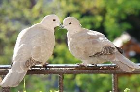 Kedvenc gerléim. Nekik nem voltak párkapcsolati gondjaik.