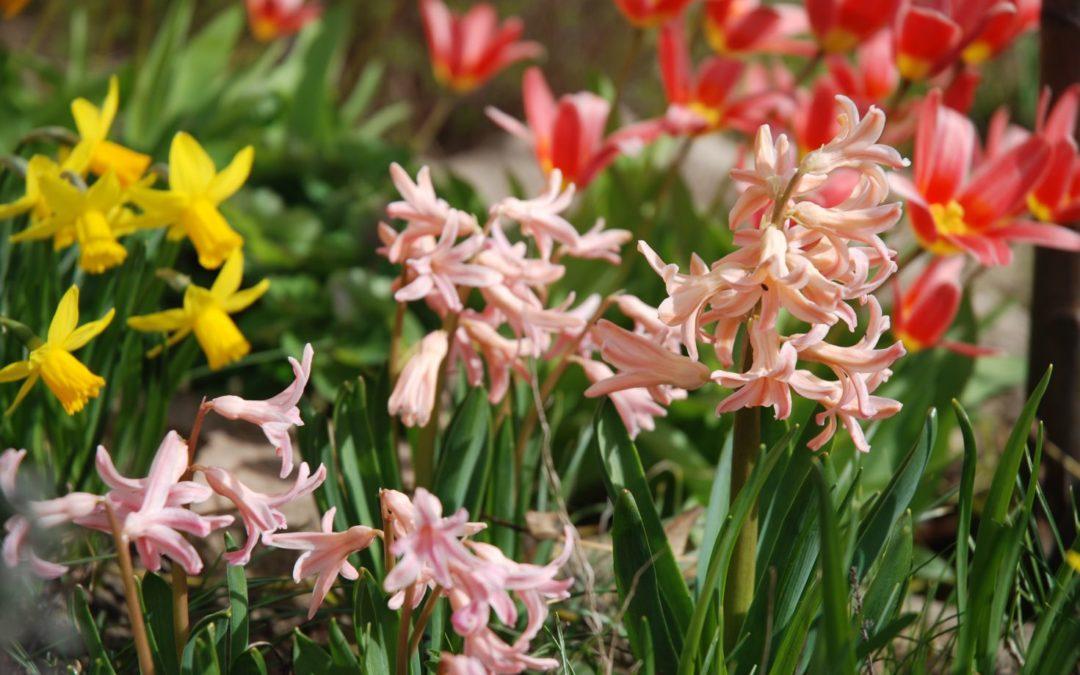 A tavasz illata