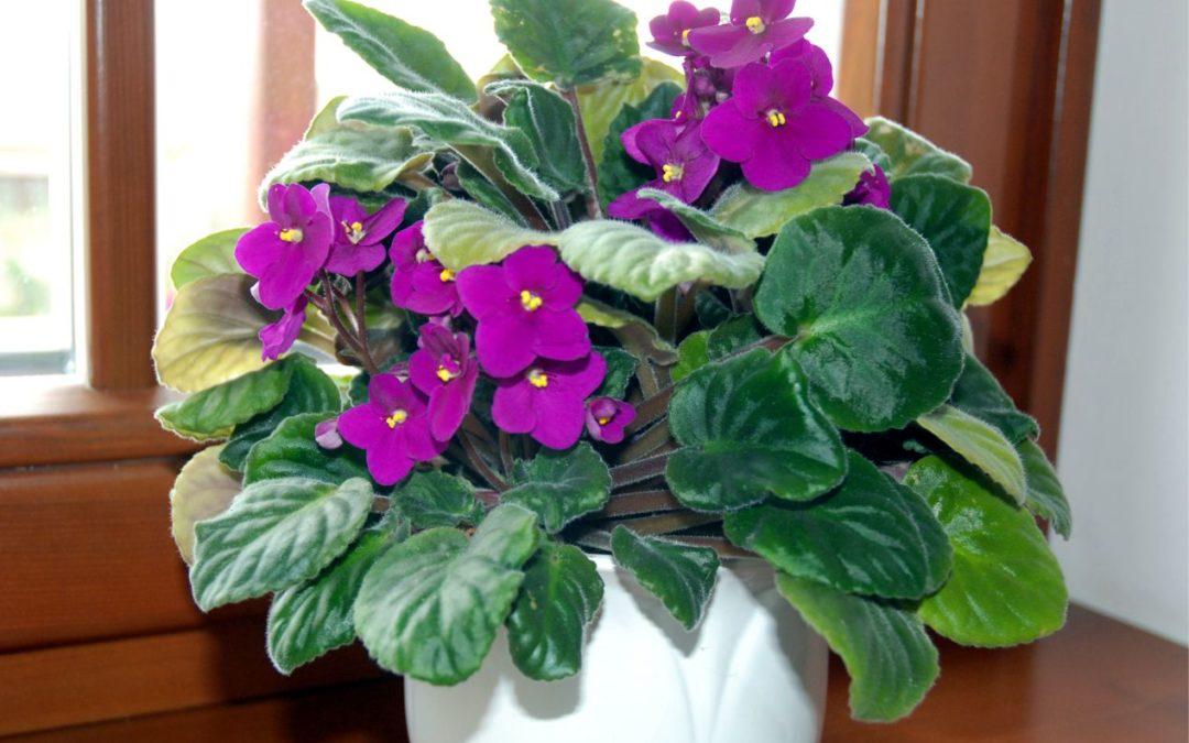 Szobanövények a tiszta levegőért és az egészséges környezetért
