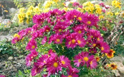 Az őszi kert csodája