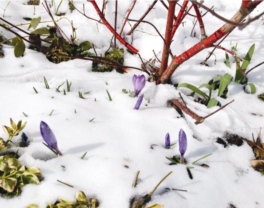 Vaszati a kertben – tippek a téli tervezgetéshez