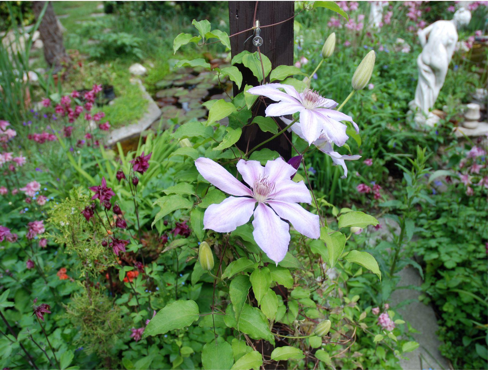 Ha az idei egyik célod az, hogy felújítod a kertedet, vagy létrehozol egy újat, tegyél a célkitűző tablódra olyan kertfotókat, amilyen kertre vágysz.