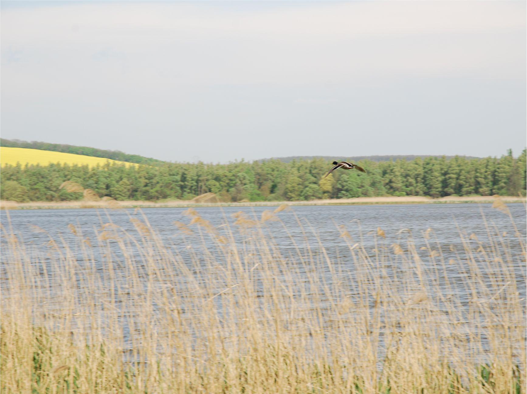 Kirándulások, nyaralások alkalmával különleges élményben lehet részed, ha egy reggeli sétát teszel a közeli vízparton.