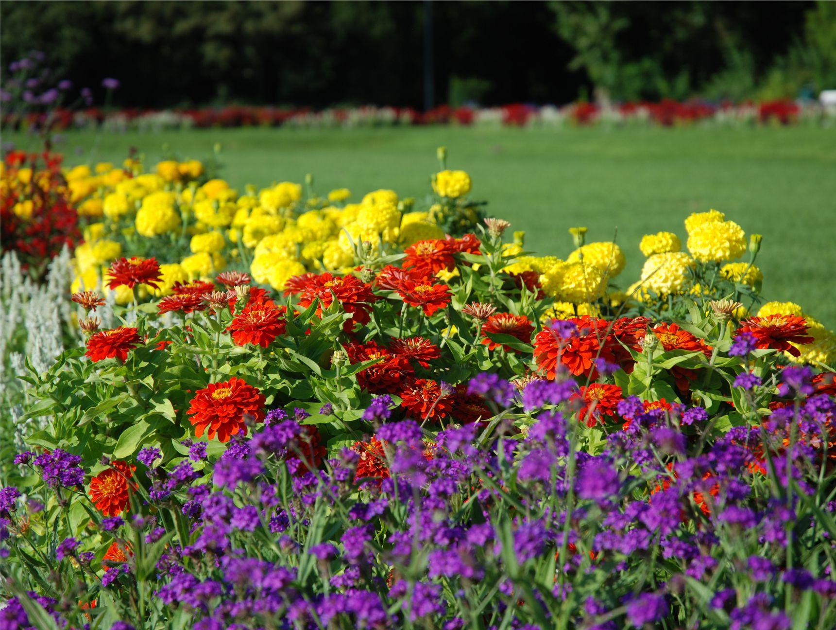 Ha társasházban laksz, akkor menj el reggelente a közeli parkba! Ez a kép a Margitszigeten készült.