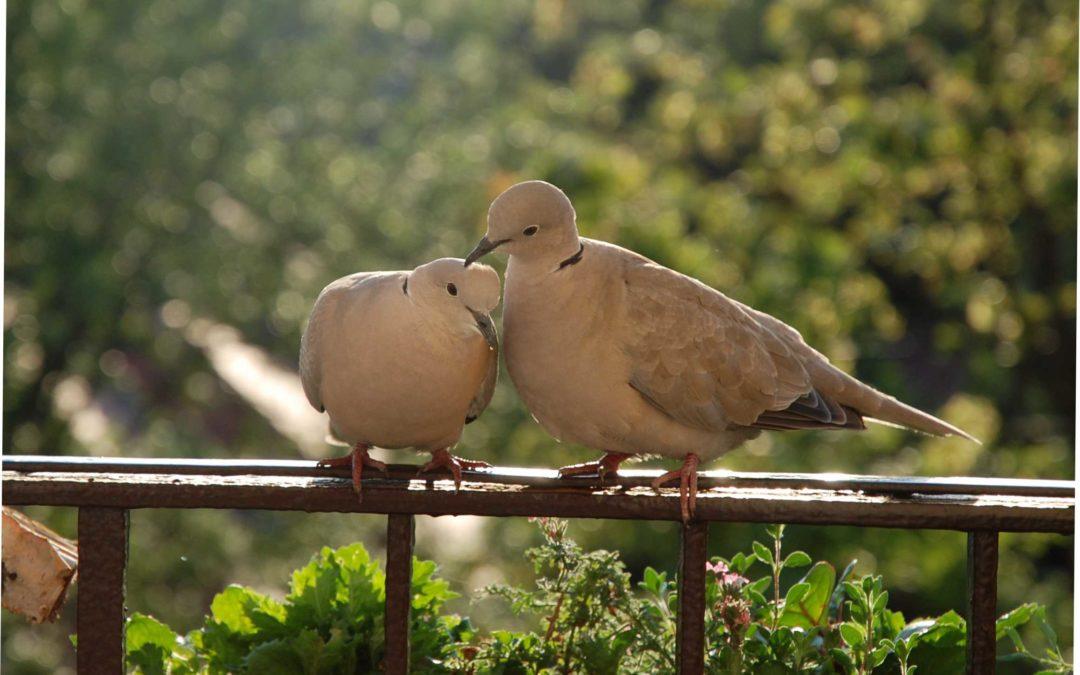 Ők nagyon szeretik egymást!