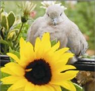 Figyelted már? A madarak is egészen másképp énekelnek (vagy éppen huhognak) hajnalban, mint késő este