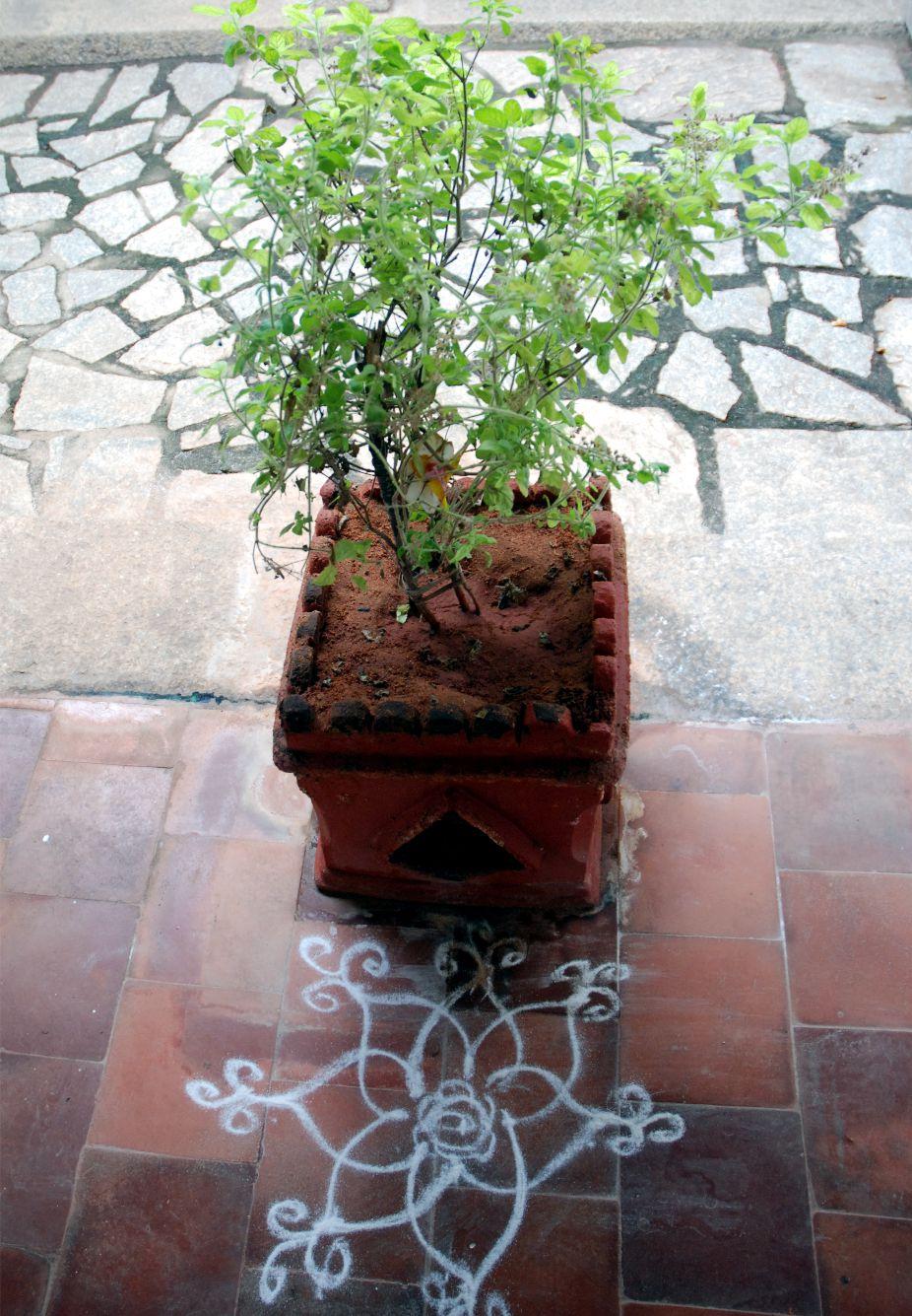A rajzok lehetnek egészen egyszerűek. Itt még India szent növényét, Tulasi-devit is láthatod.