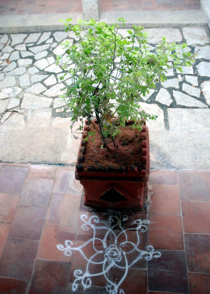 Az egész házra jó szerencsét hoz a Brahmasztán közepén elhelyezett Tulasi növény. Előtte egy egyszerű, kézzel rajzolt rangolit látsz, ami szintén kedvező.