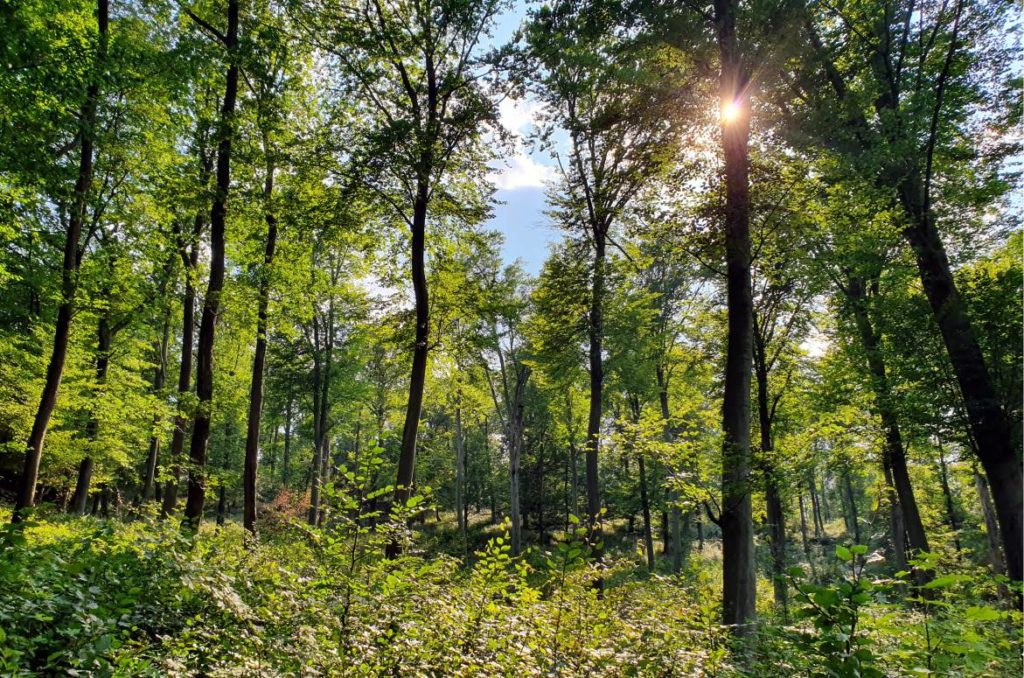 Az erdőnek már a puszta látványa is jó érzéssel tölt el. Tudtad, hogy a védikus időkben a szent királyok életók alkonyán átadták a fiuknak a trónt, majd az erdőbe vonultak, hogy az ott élő szentek és bölcsek társaságában a Legfelsőbb után kutassanak?
