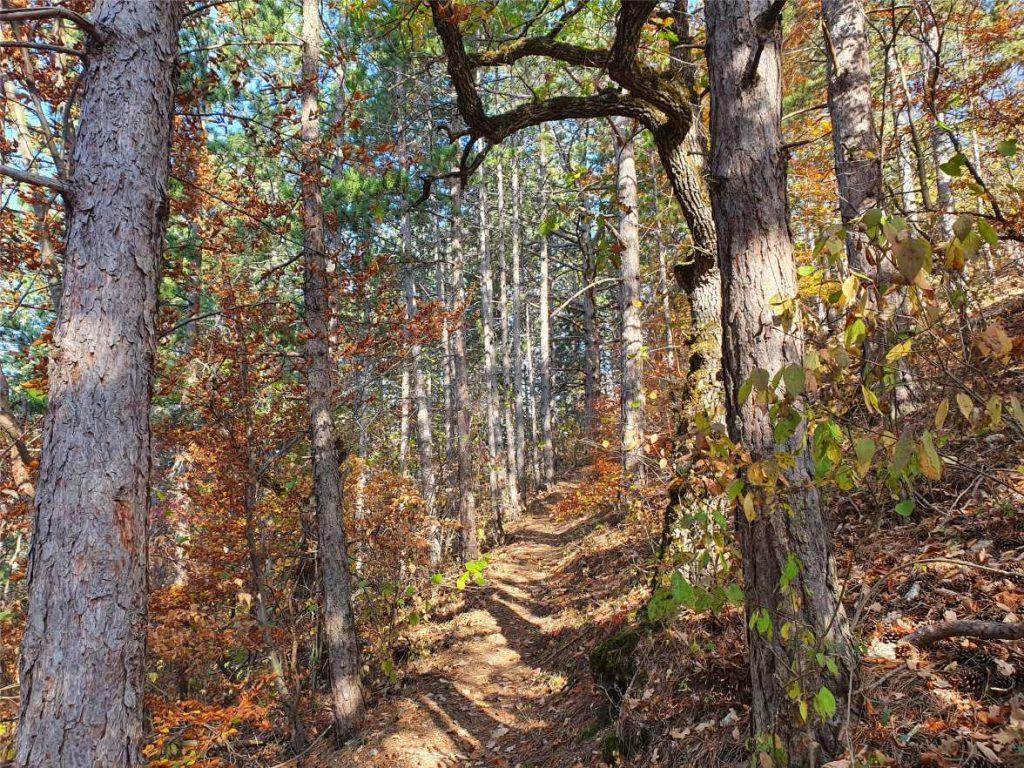 Egy séta a természetben mindig jó ötletekkel ajándékoz meg. Ennek az oka lehet maga a természet szépsége és persze a mozgás, és a friss, oxigéndús levegő, amely segíti a gondolkodást. Ha nem megy a munka vagy úgy érzed, efogyott az alkotó ereőd, a legjobb döntés, amit tehetsz, hogy felállsz a székből és sétálsz egyet a természetben.