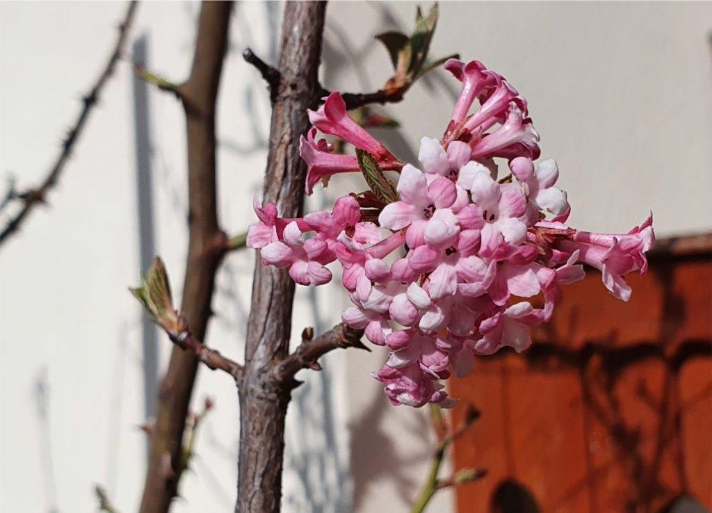 A tavasz az idén is olyan, mint máskor, de lehet, hogy az idén sokkal inkább észrevesszük a szépségeit...