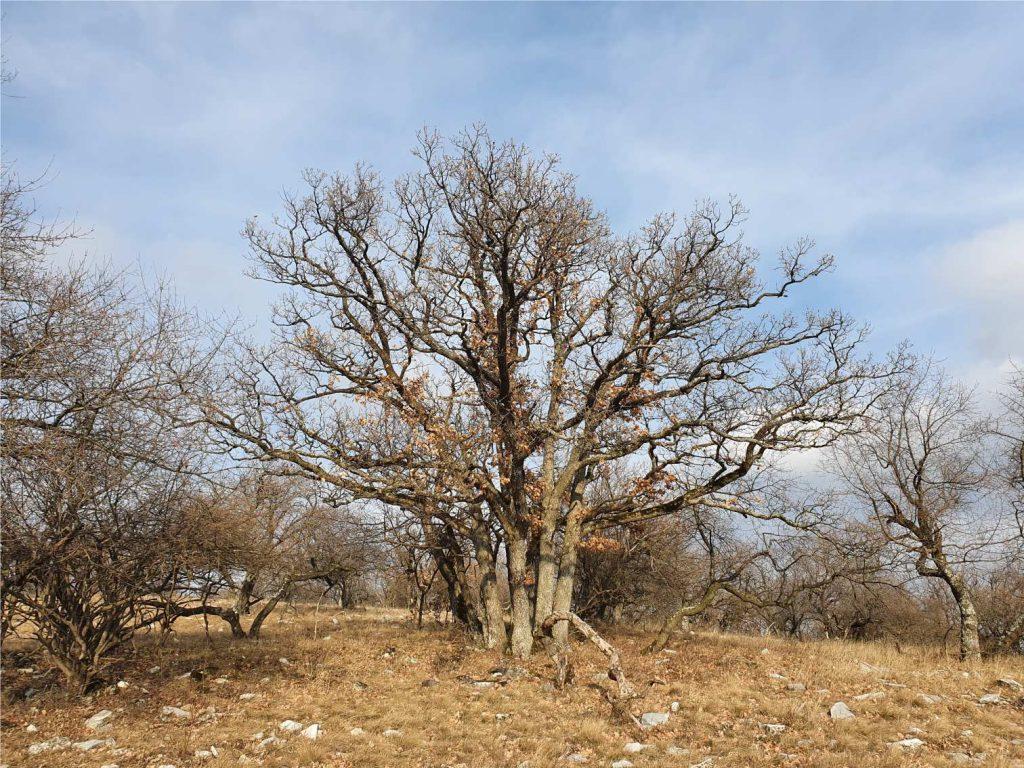 Ha életünk fő összetevőit egyensúlyban tudjuk tartani, akkor olyanok leszünk, mint egy egészséges fa. Ha a fának megjelennek a levelei is, akkor lesz igazán szép. Mi is akkor leszünk teljesek, ha másokért is teszünk valamit.