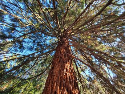 Nézd, milyen gyönyörű, erős törzse van ennek a fának!
