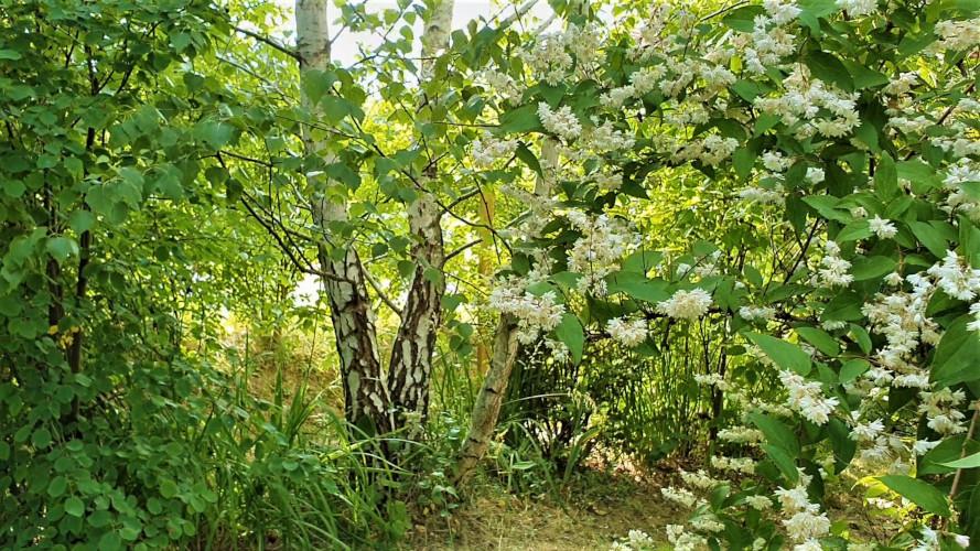 Mit keres egy erdő a kertünkben?